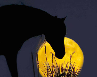 The Horse In The Moon Art Print