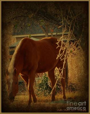 Photograph - The Horse N The Apple Tree  by Bobbee Rickard