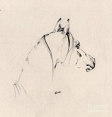 Horses Drawing - The Horse Sketch by Angel  Tarantella