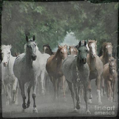 Grey Horse Digital Art - The Horsechestnut Tree Avenue by Angel  Tarantella