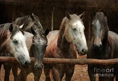 Grey Horse Digital Art - The Horses by Angel  Tarantella