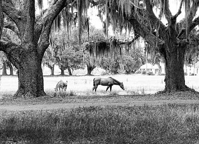 Photograph - The Horses Of Coosaw Plantation by Scott Hansen