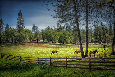 Photo Royalty Free Images - The Horses of Placerville Royalty-Free Image by Janis Knight