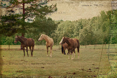 Photograph - The Horses by Paulette B Wright