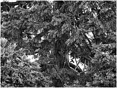 Photograph - The Hugging Tree by Lance Sheridan-Peel