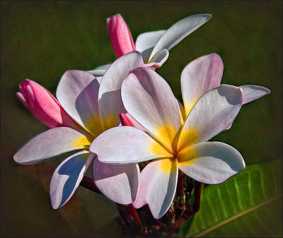 Photograph - The Hula Flower by Hanny Heim