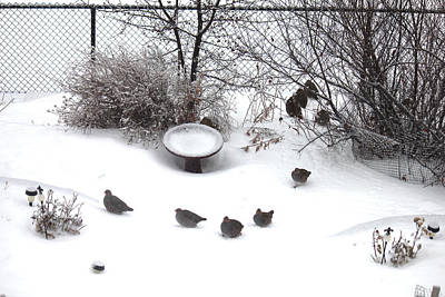 Photograph - The Hungarian Partridge Huddle by Donna Munro