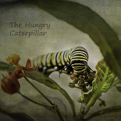 Photograph - The Hungry Caterpillar by Kim Swanson