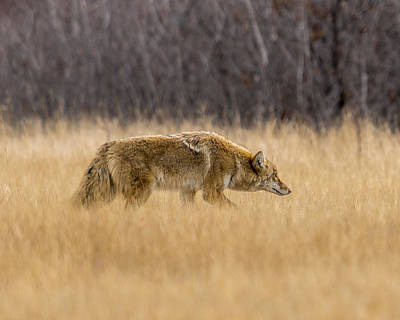 Photograph - The Hunt by Steve Thompson