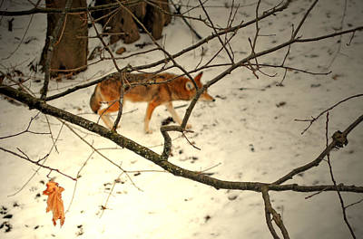 Photograph - The Hunter Behind by Emily Stauring