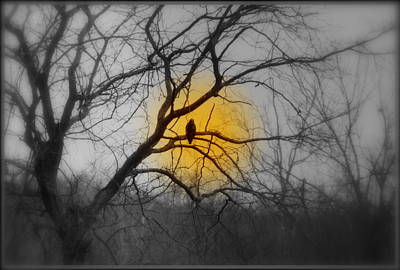 Photograph - The Hunters Moon And The Barred Owl by Kathy Barney