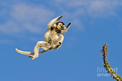 The Importance Of Precision Timing Art Print by Ashley Vincent