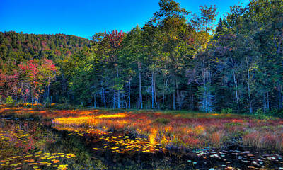 Photograph - The Inlet To Cary Lake by David Patterson