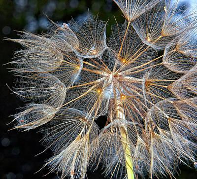 Steve Harrington Photograph - The Inner Weed by Steve Harrington