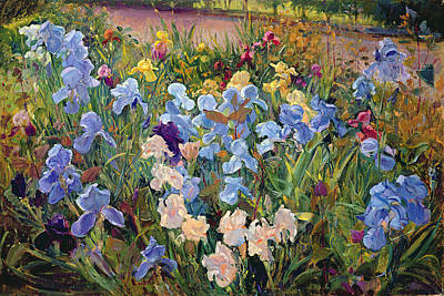 Blue Iris Painting - The Iris Bed by Timothy Easton