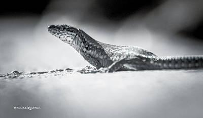 Photograph - The Iron Lizard IIi by Stwayne Keubrick