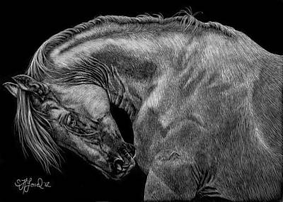 Dressage Drawing - The Itch by Stephanie Ford