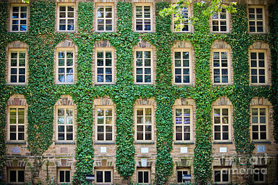 Photograph - The Ivy Walls by Colleen Kammerer