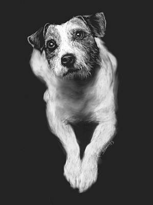 Drawing - The Jack Russell Stare- Got Ball? by Rachel Hames