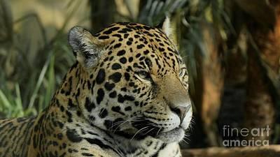 Pop Art - The Jaguar by MSVRVisual Rawshutterbug