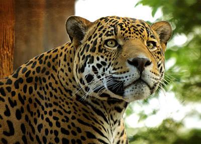 Photograph - The Jaguar  by Saija  Lehtonen
