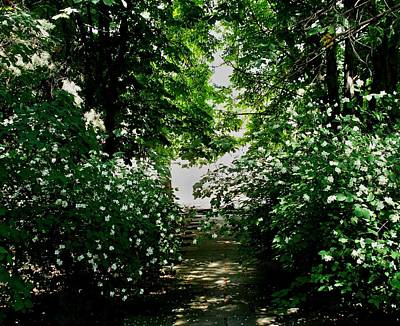 Photograph - The Jasmine Path  by Rick Todaro