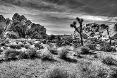 Photograph - The Joshua Tree by Heidi Smith