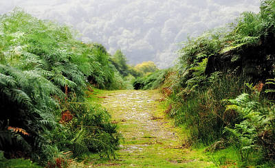 Photograph - The Journey For 1000 Miles Starting From One Step. The Nature Of Ireland by Jenny Rainbow