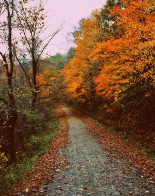 Photograph - The Journey Is The Reward by Diane Alexander