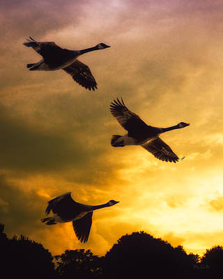 Goose Wall Art - Photograph - The Journey South by Bob Orsillo