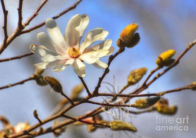 Photograph - The Joy Of Spring by Kathy Baccari