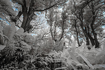 Photograph - The Jungle In Infrared 1 by Jason Chu