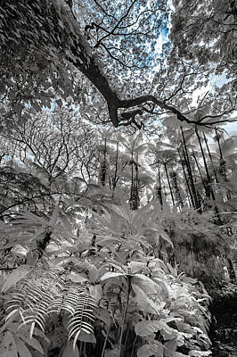 Photograph - The Jungle In Infrared 2 by Jason Chu