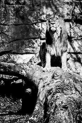 Photograph - The Jungle King by Stwayne Keubrick