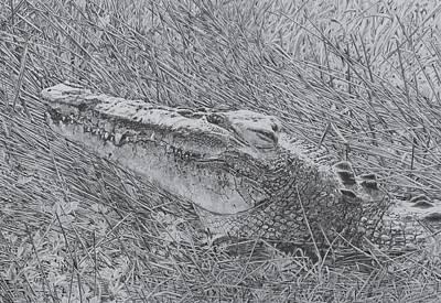 Wetlands Drawing - The Kakadu Smile by Leonie Bell