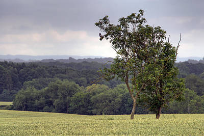 Photograph - Two Trees In Wheat Field by Keith Armstrong