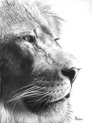 Drawing - The King by Brent Ander