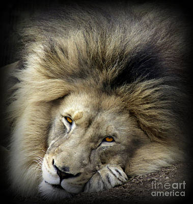Photograph - The King by C Ray Roth