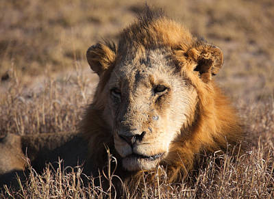 Photograph - The King by Craig Brown