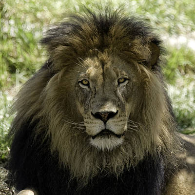 Photograph - The King by Gary Neiss