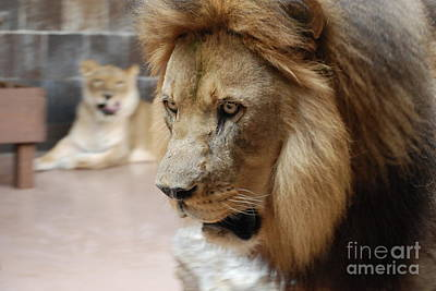 Photograph - The King by Mark McReynolds