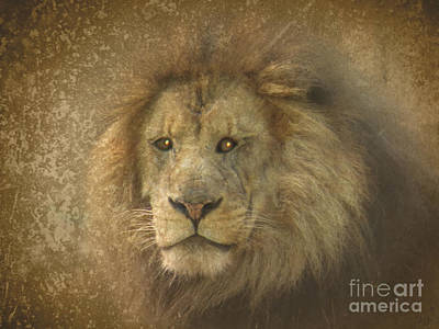 Photograph - King Of The Jungle by Dawn Gari