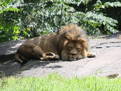 Photograph - The King On His Day Off by John Telfer