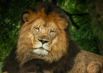 Art Print featuring the photograph The King Rests by Linda Karlin