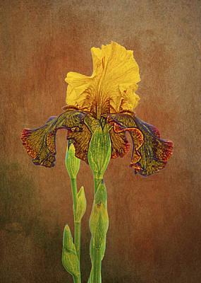 Yellow Bearded Iris Photograph - The Kings Prize Iris by Michael Peychich