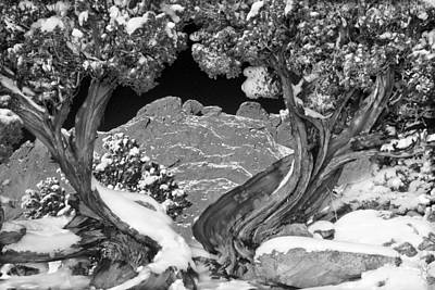 Photograph - The Kissing Camels Framed By An Ancient Juniper by Bijan Pirnia