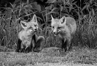 Fox Photograph - The Kits Monochrome by Steve Harrington