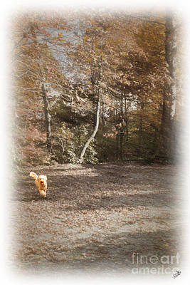 Photograph - The Labradoodle On The Go by Sandra Clark