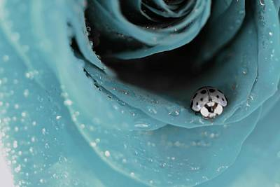 Lady Bug Photograph - The Lady And Her Rose by The Art Of Marilyn Ridoutt-Greene