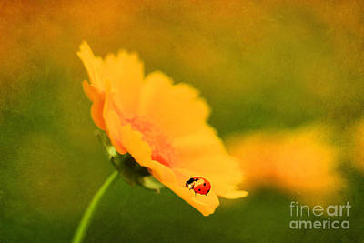 The Lady Bug Art Print by Darren Fisher